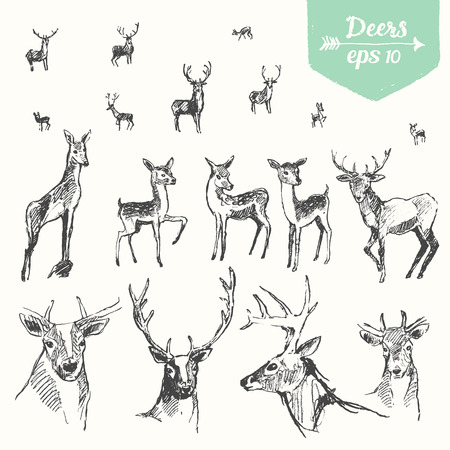 hart: Set of hand drawn deers, vintage illustration, sketch