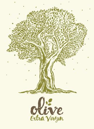 disegnata a mano illustrazione vettoriale di etichette d'epoca albero di oliva per l'olio d'oliva Vettoriali