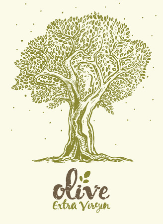 olive tree: Hand drawn vector illustration of olive tree Vintage label for olive oil