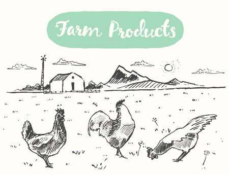 range: Hand drawn illustration of a free range chicken, farm fresh chicken meat, vector illustration, sketch Illustration