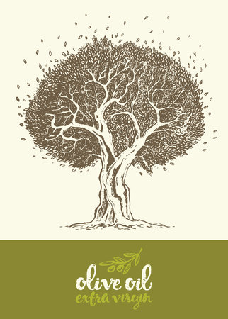 olive: Hand drawn vector illustration of olive tree Vintage label for olive oil