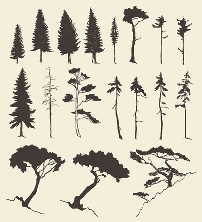 fir trees: Hand drawn vector silhouette of pine and fir trees