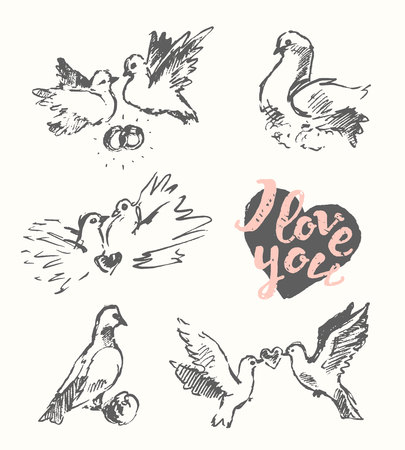 two animals: Beautiful hand drawn wedding pigeon, love symbol, vector illustration, sketch