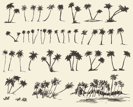 fronds: Vector illustrations silhouette of palm trees hand drawn sketch forty pieces