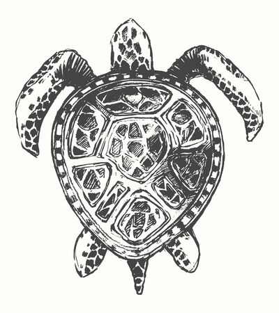 carapace: Hand drawn turtle illustration, template sketch