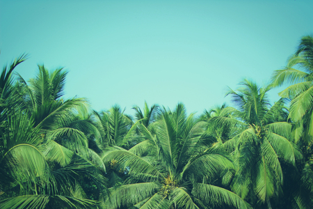 palm trees: Coconut palm trees at tropical beach, vintage filter