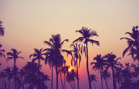 Silhouette of palm trees at sunset vintage filter