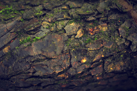 bark background: Tree bark texture after rain organic background wood Stock Photo