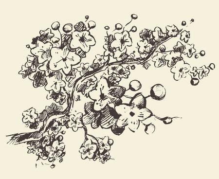 fleur de cerisier: Croquis de branche de sakura avec des fleurs. Illustration