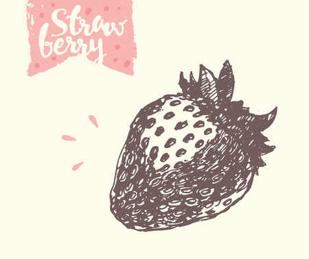 sketch: strawberry, illustration, sketch draw Illustration