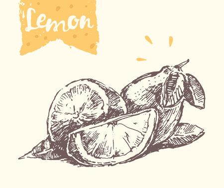 sketch: lemon, illustration, sketch draw Illustration
