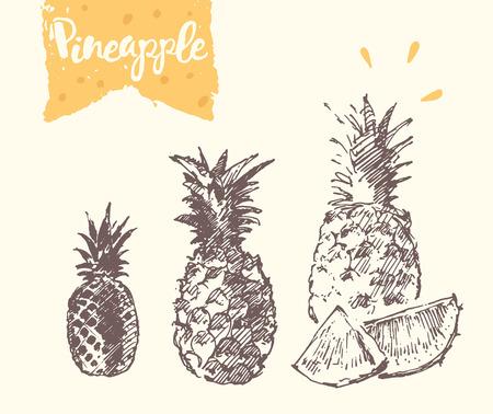 sketch: pineapple, illustration, sketch draw