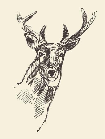 tallado en madera: Deer cabeza grabado estilo, ilustración vintage, dibujado a mano, dibujo