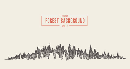 wanderlust: Pine forest background vector drawn sketch Illustration