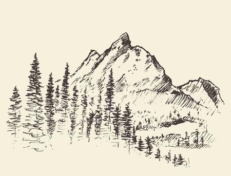 Vector mountain peak pine forest hand drawn