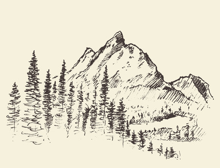 Vector mountain peak pine forest hand drawn