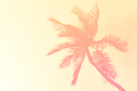 Coconut palm trees abstract filtered background pink Stock Photo