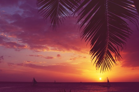 Silhouette of palm tree and sailboats at sunset, faded filter