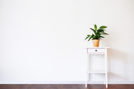 Modern clean interior with stand and plant on empty white wall background, place for your text Imagens