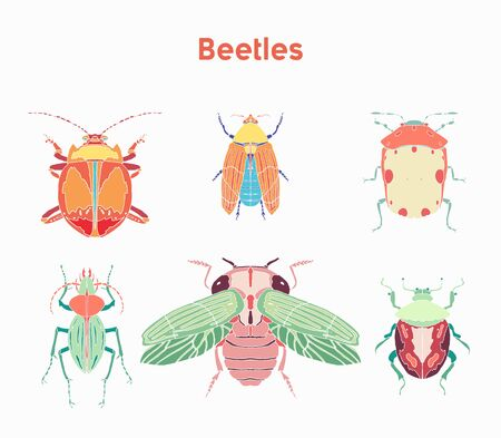 Set drawn vector illustrations beautiful beetles