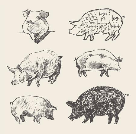 schemes: Drawn vector pigs Scheme pork cuts restaurant menu