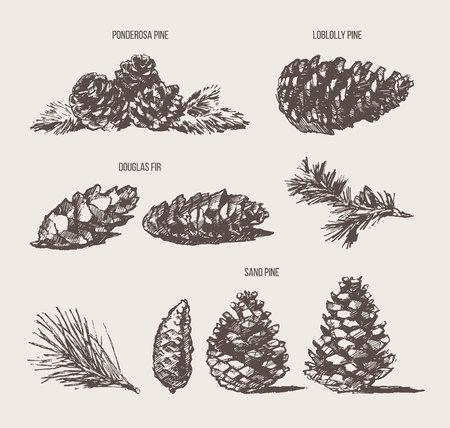 Set pine cones design elements drawn vector sketch Illustration