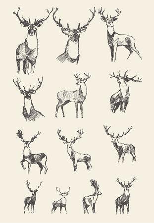 Stellen Sie gezogene edle Hirsche ein, vector Illustration, Skizze Vektorgrafik