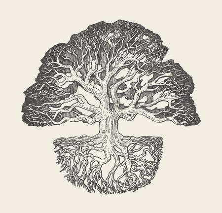 Old oak tree root system drawn vector illustration