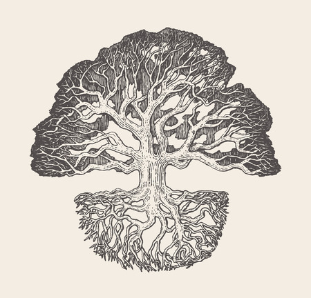 Old oak tree root system drawn vector illustration