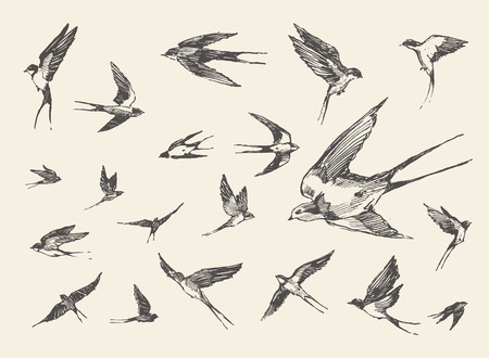 Hand-drawn vector illustration of a silhouette flock birds flying swallows drawn vector sketch Vettoriali
