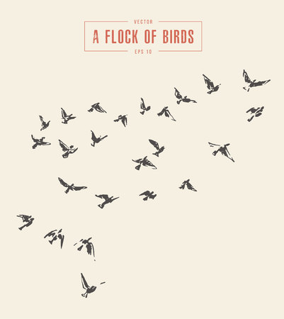 A flock of birds, hand drawn vector illustration. Vettoriali