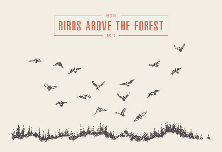Hand drawn landscape with birds flying above the fir forest, vintage vector illustration, sketch