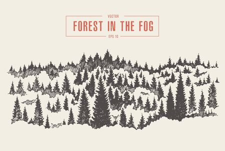 Misty fog pine forest mountain drawn vector sketch