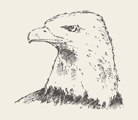 Eagle looking into the distance. Hand drawn vector illustration, sketch