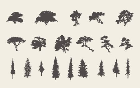 Set Silhouetten Bäume Kiefer Tanne Zeder Vektorskizze Vektorgrafik