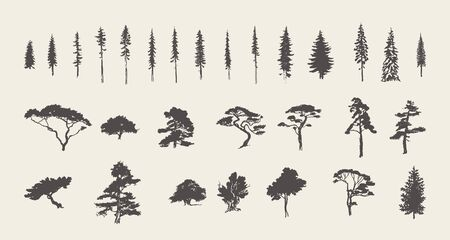 Set Silhouetten Bäume Kiefer Tanne Zeder Vektorskizze