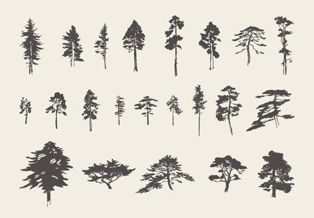 Set silhouettes trees pine fir cedar vector sketch Vector Illustratie