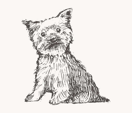 Yorkshire Terrier draw vector dog realistic sketch
