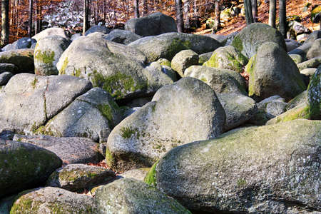 a pile of rocks in a mystical forest photo