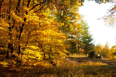 forest clearing in the autumn photo