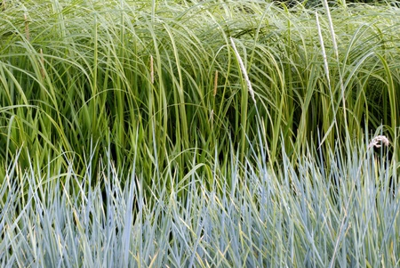 grass verge: Two colors long grass meadow Stock Photo