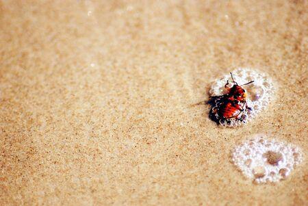 beetle: sinking beetle Stock Photo