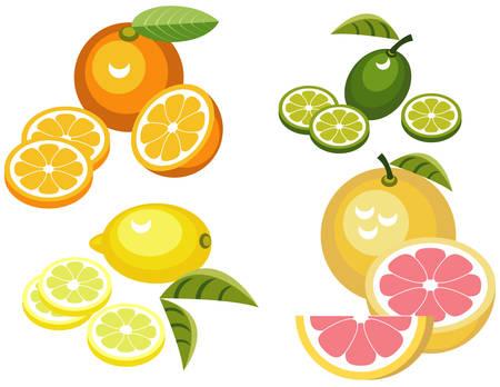 Set of citrus fruit illustrations Vettoriali