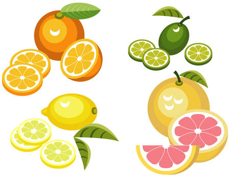 Set of citrus fruit illustrations Çizim
