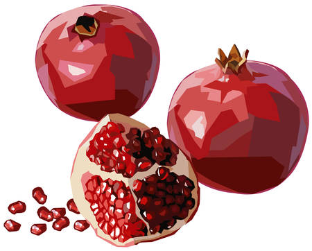 antioxidant: Pomegranate Illustration