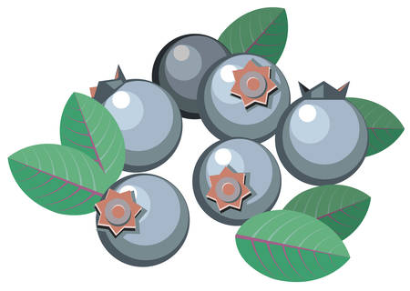 Illustration of simplistic blueberries with leaves Illustration