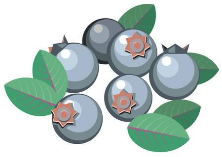 Illustration of simplistic blueberries with leaves Ilustração