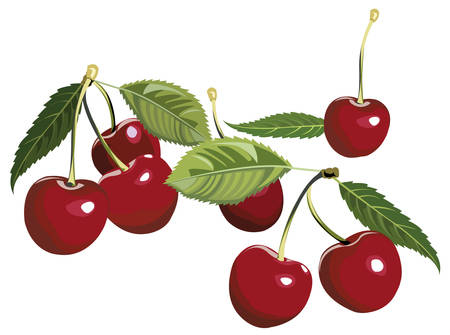 Illustration of artistic cherries with leaves
