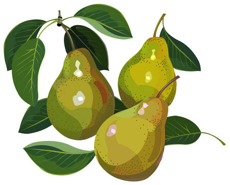 Pears Imagens - 5664505