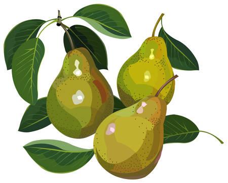 Pears Illustration